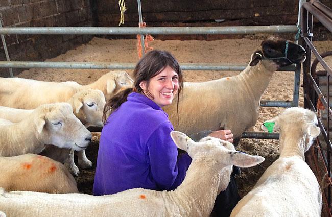 tara_And_Sheep